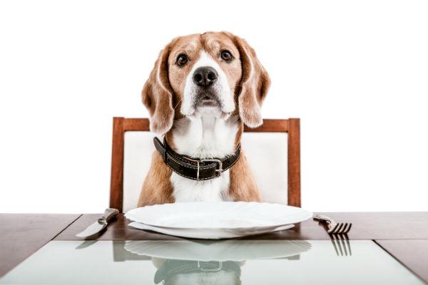 Hond aan gedekte tafel. Alles over voedselallergie bij honden